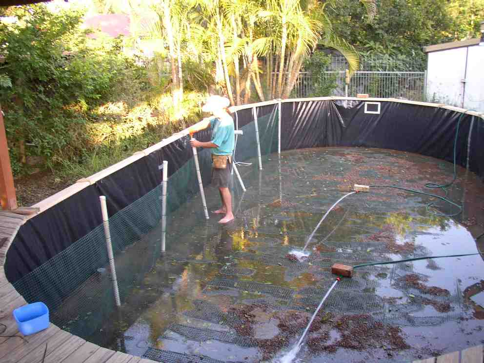 Undergravel filter for What fish should i put in my pond